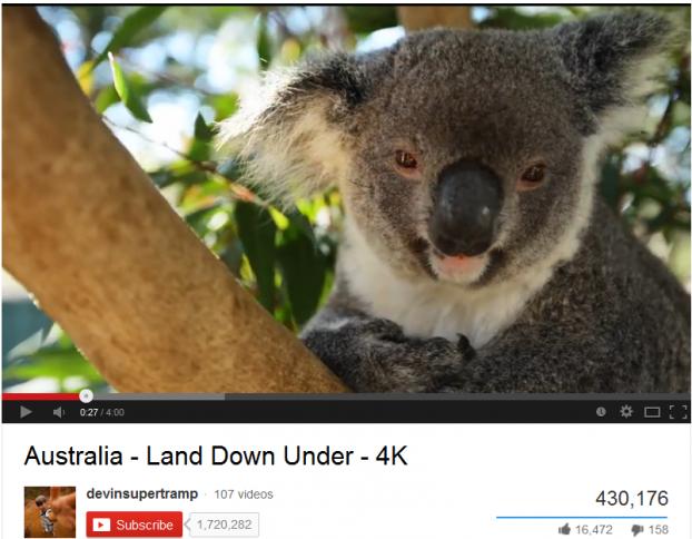 4K koala