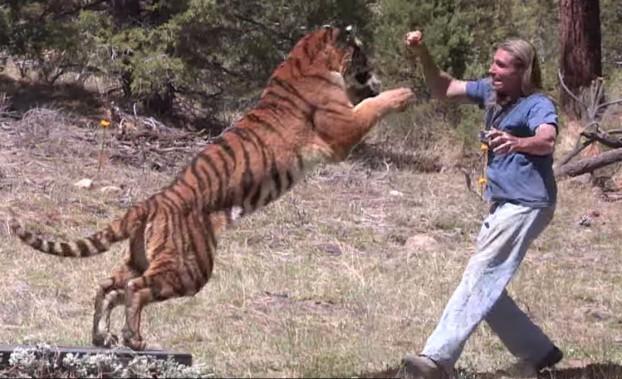 Tiger Attack Stunt
