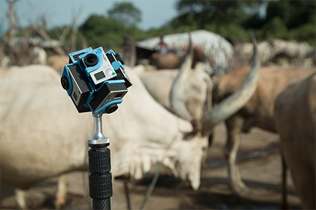 VR_SouthSudan_Marcelle_Cattle